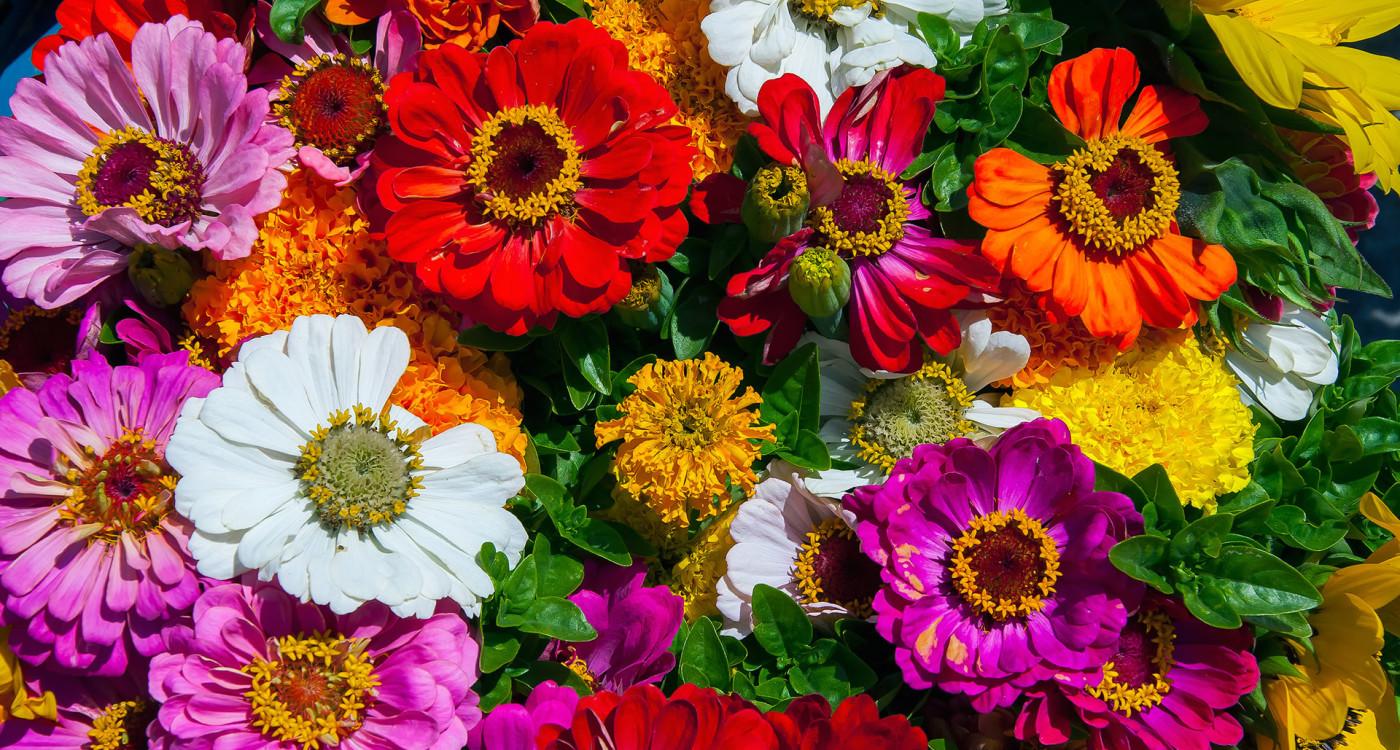 País-de-origen-de-las-flores-más-bonitas-del-mundo